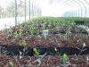 Piccole piante