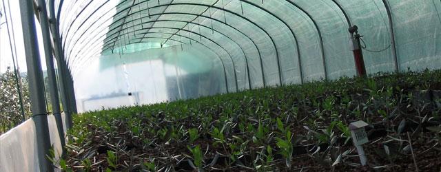 """15 aziende produttrici di olio, con piante provenienti dai nostri vivai e in concorso alla selezione """"Giornata dell'Olio d'Oliva"""" di Massa Marittima, si sono posizionate ai vertici della classifica"""